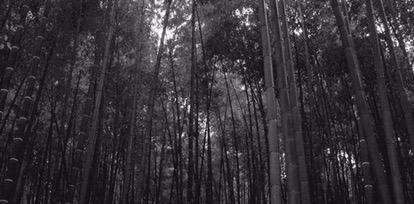 The Bamboo Acrobat